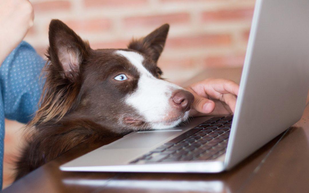 Tierbesitzer nutzen Video-Sprechstunden